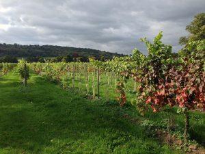 Denbies Vineyard Dorking Surrey
