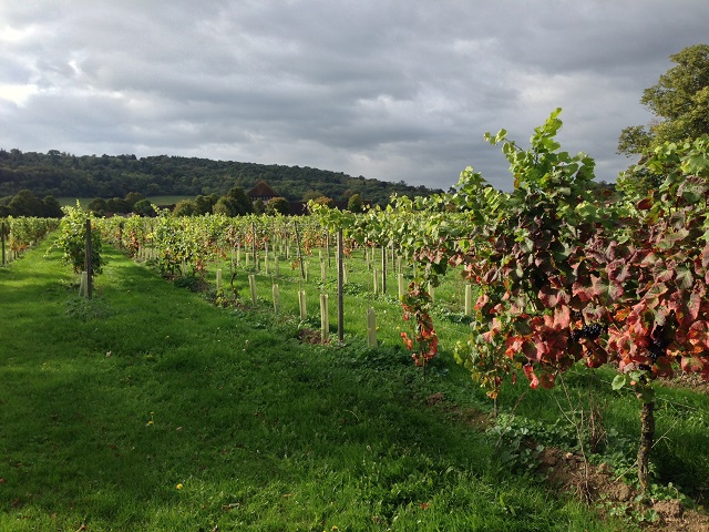 Denbies Vineyard Dorking Surrey